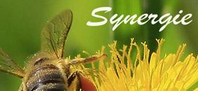 Biene Synergie